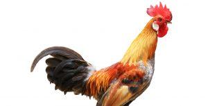 Cresta de gallo