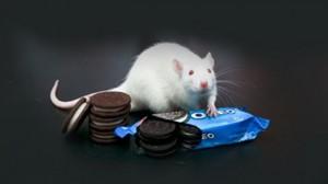 7a53c7b5da489947c7b794bcc9372a38_article-300x168 Las galletas Oreo pueden ser tan adictivas como la morfina o la cocaína