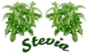 Stevia-300x191 La Stevia, un beneficioso sustituto del azúcar
