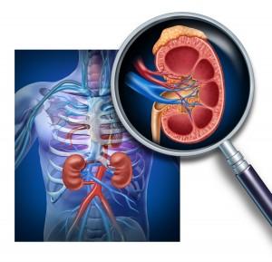 glândula adrenal