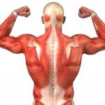 Você sabia que as proteínas ajudam a perder peso? 2
