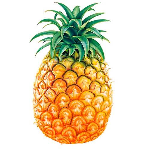 dibujos-infantiles-frutas-pina