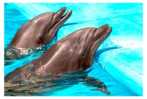 dieta-delfin-300x203 ¿Cuáles son las dietas mas buscadas en Google?