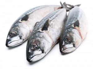 sardina y caballa shutterstock_162122510