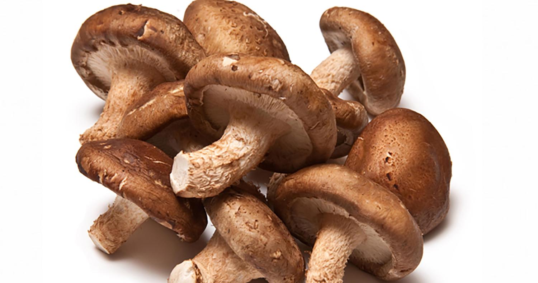 Você conhece o cogumelo Shiitake? 4