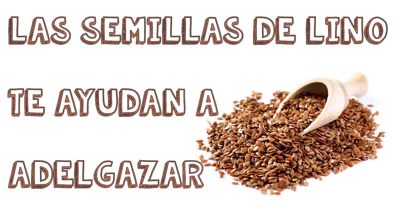 Las semillas de lino, te ayudan a adelgazar - El Blog de