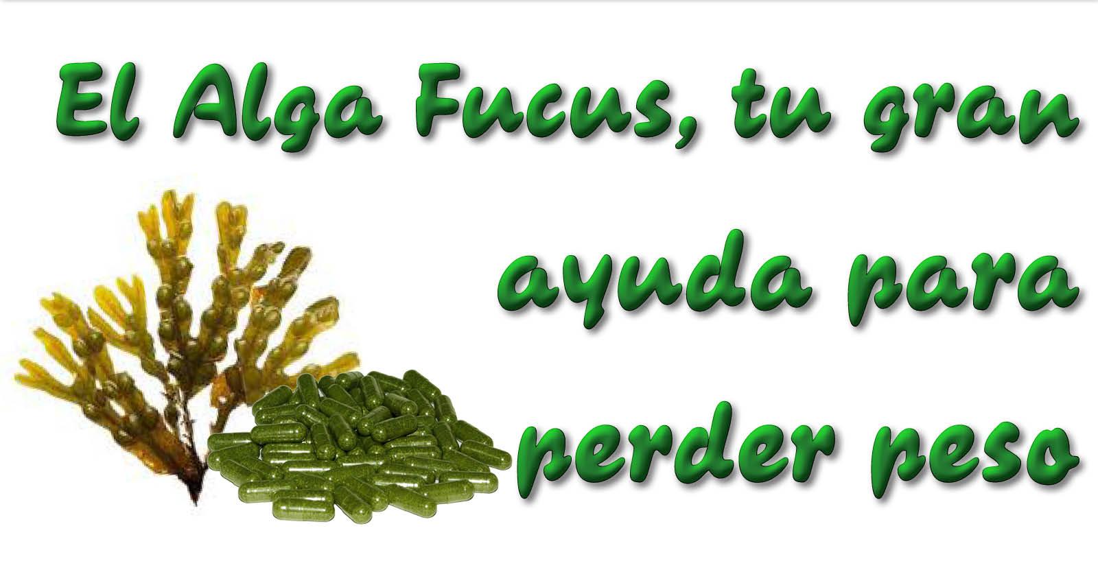 Algas fucus adelgazar y