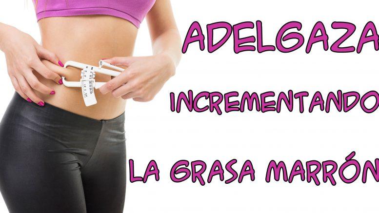 Banner para Articulo grasa marron