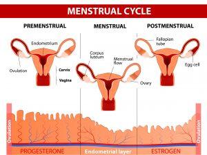 26036704_l-300x224 ¿Cómo afecta el ciclo menstrual al peso?