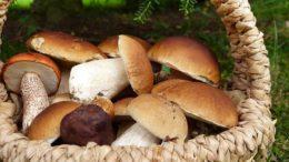 mushrooms 3686917 640